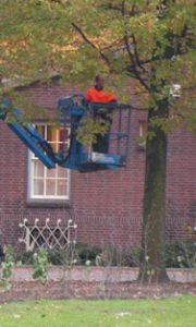 Bomen snoeien vanuit hoogwerker